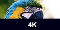 4K Beamer